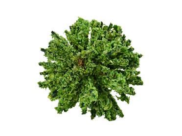 Büsche hellgrün, 3,5 cm hoch